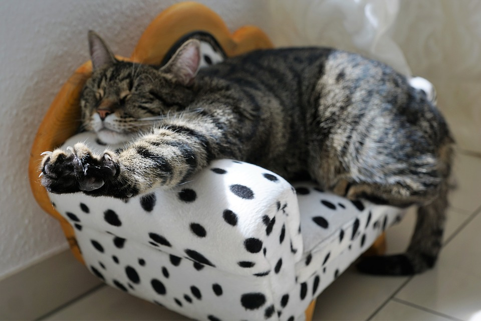 cat-2360863_960_720